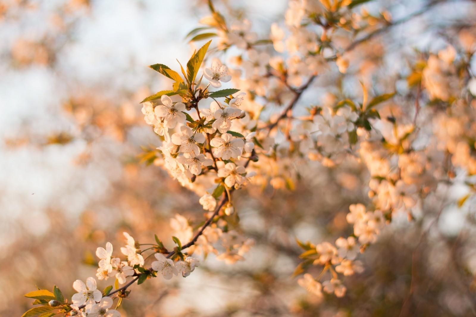 april photo